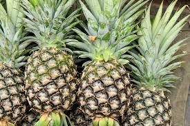Pineapple [पाइनएप्पल] – अनन्नास [Ananas]