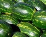 Water-melon [Tarbuj, Tarbooj]