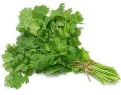 green coriander हरा धनिया